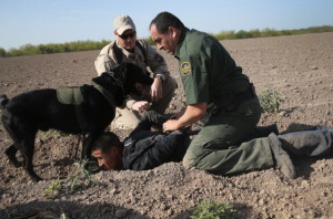 MISSION, TX - APRIL 11: A U.S. Border Patrol canine team works with an U.S. Air and Marine agent to detain an undocumented immigrant after chasing him down near the U.S.-Mexico border on April 11, 2013 near Mission, Texas. A group of 16 immigrants from Mexico and El Salvador said they crossed the Rio Grande River from Mexico into Texas during the morning hours before they were caught. The Rio Grande Valley sector of has seen more than a 50 percent increase in illegal immigrant crossings from last year, according to the Border Patrol. Agents say they have also seen an additional surge in immigrant traffic since immigration reform negotiations began this year in Washington D.C. Proposed refoms could provide a path to citizenship for many of the estimated 11 million undocumented workers living in the United States. (Photo by John Moore/Getty Images)